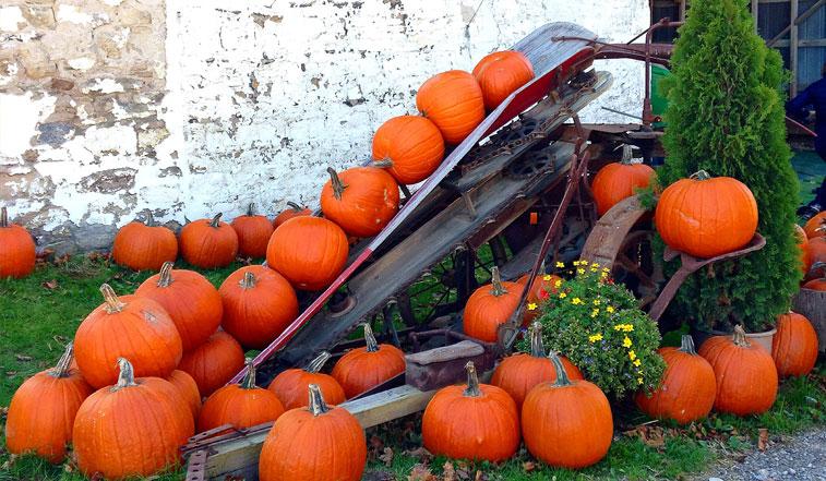 Best pumpkin patches around portsmouth nh.